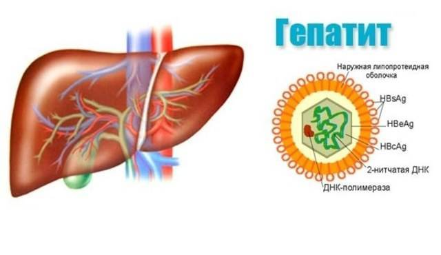 Какой специалист лечит гепатит с