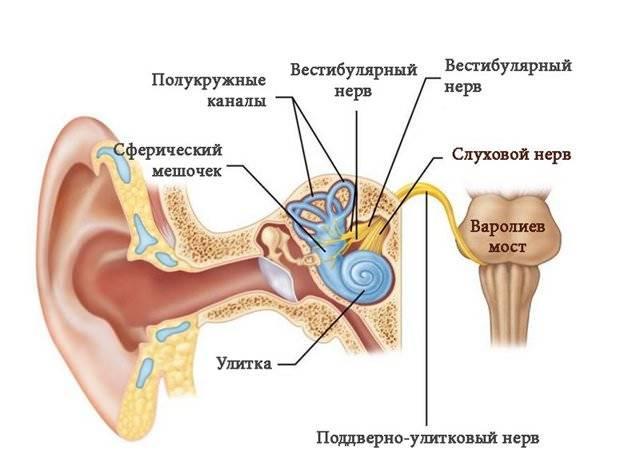 Неврит   симптомы   диагностика   лечение - docdoc.ru