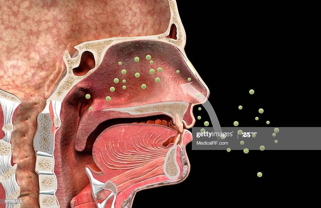 Как у взрослых быстро вылечить риносинусит