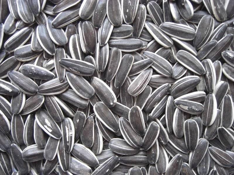 Лечение холестерина семечками и семенами подсолнуха (подсолнечника): рецепт для снижения