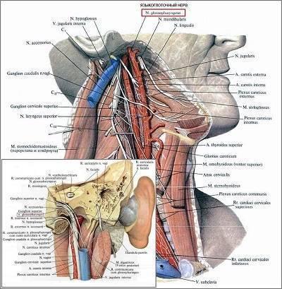 Симптомы и лечение невралгии языкоглоточного нерва