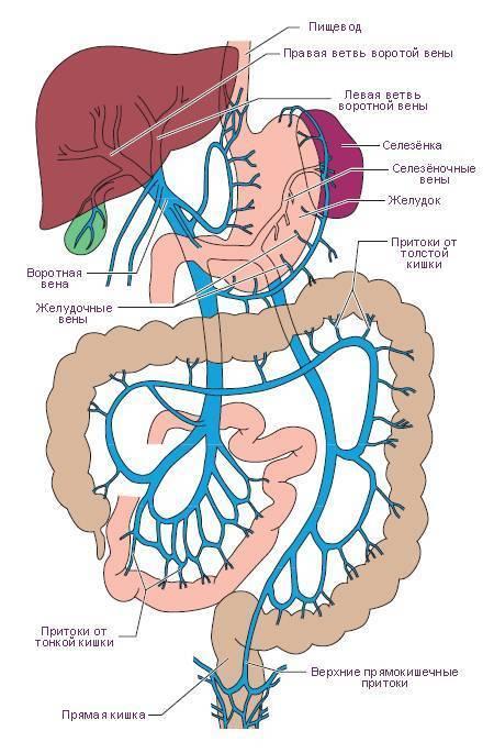 Воротная вена печени: какая норма диаметра, схема, патологии, лечение