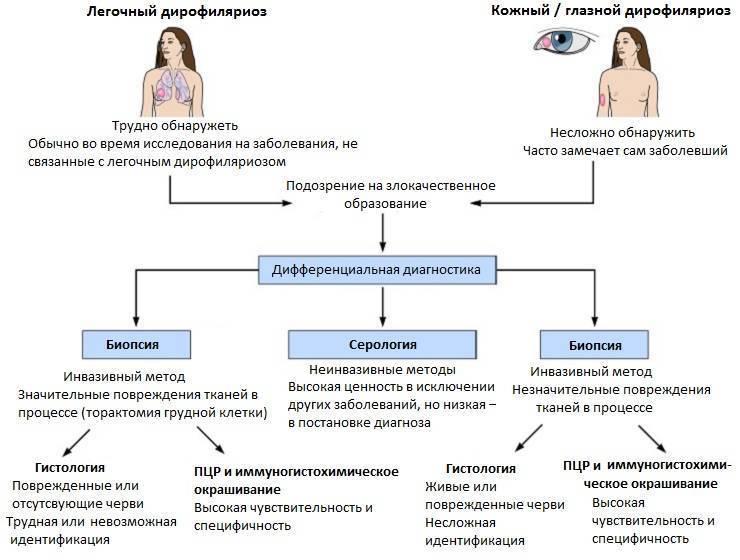 дирофиляриоз симптомы