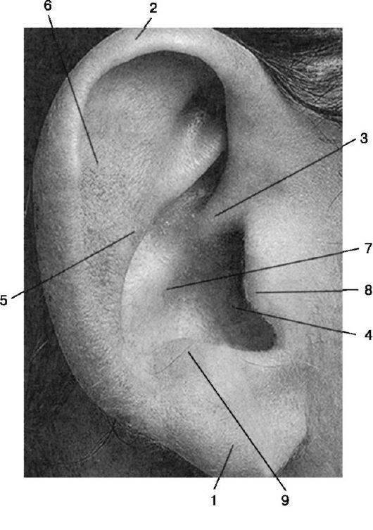 боль в ушной раковине при надавливании