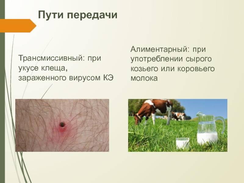 Механизмы и пути передачи инфекции