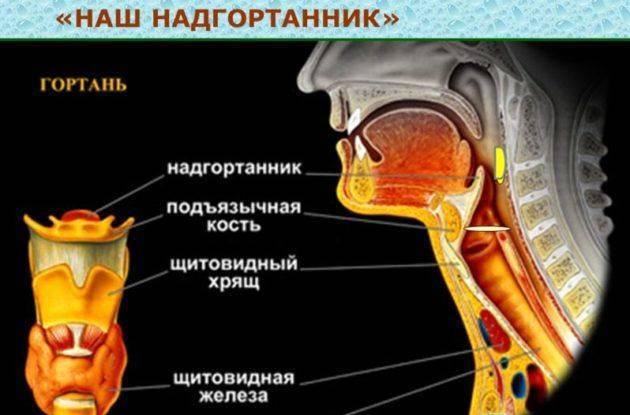 Причины и симптомы заболевания лор-органов