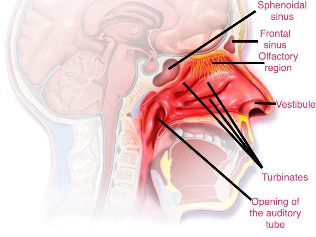 Сфеноидит: особенности течения, клинические признаки, диагностика и лечение
