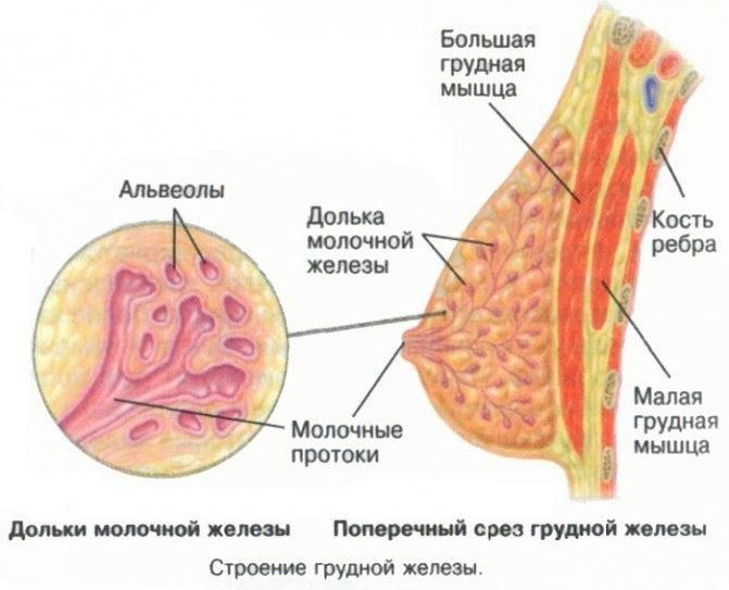 Киста молочной железы: что это такое, как лечить