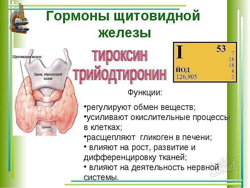 Гормоны щитовидной железы: нормы и патология