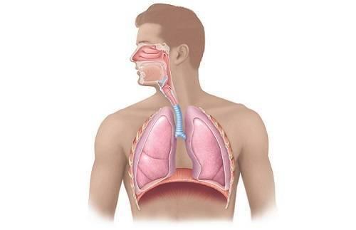 как лечить першение в горле и кашель