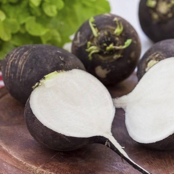 Чем полезна редька для организма — лечение корнеплодом