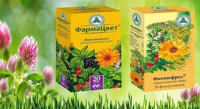 Какие травы принимать при лечении цистита?