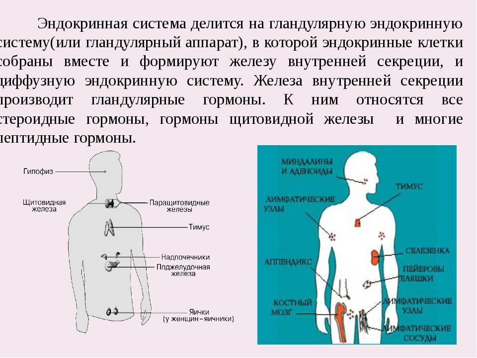 Заболевания эндокринной системы у женщин симптомы и лечение
