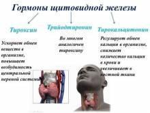 упражнение для щитовидной железы