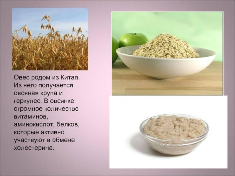 Продукты, снижающие холестерин и очищающие сосуды: диета для защиты от инфаркта и инсульта