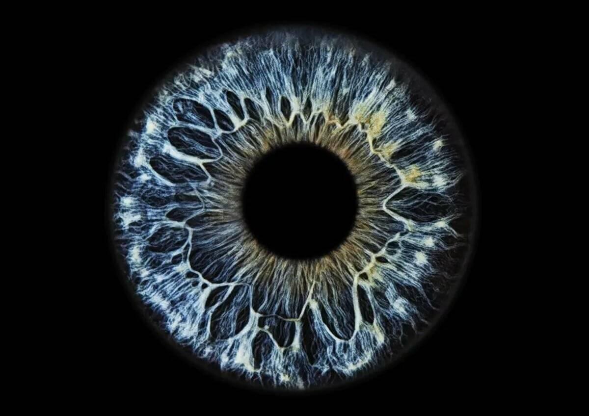 """Зрачок глаза - строение и функции, диагностика и заболевания - сайт """"московская офтальмология"""""""
