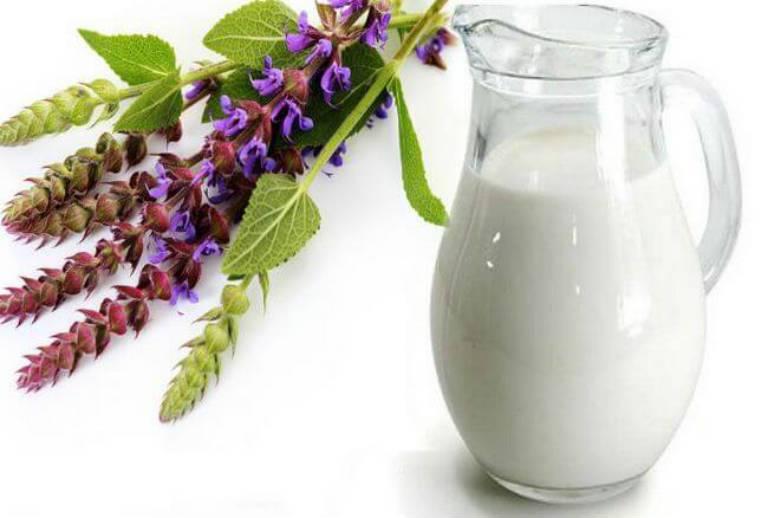 молоко с шалфеем от кашля ребенку