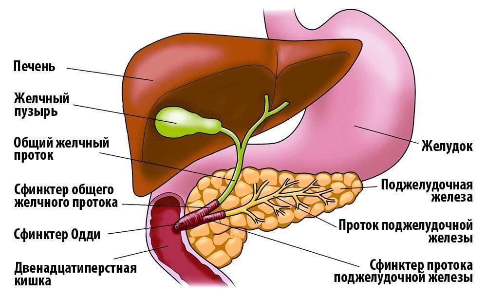 Особенности дисфункции печени