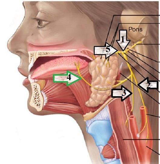 языкоглоточная невралгия симптомы