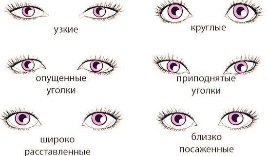 Какие бывают формы глаз?