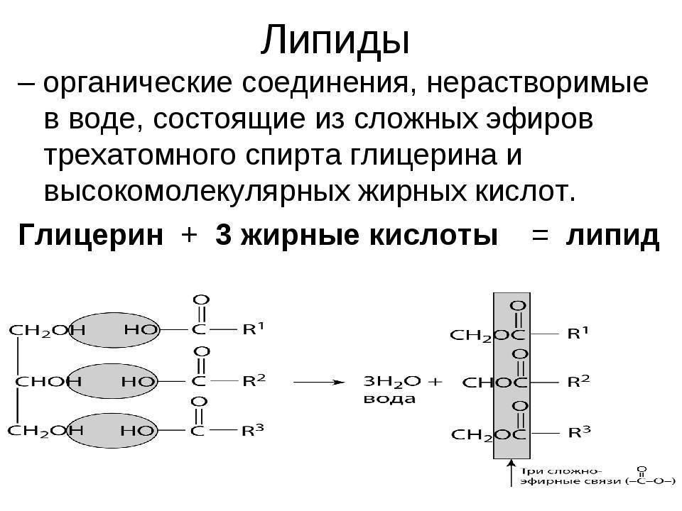 какое из веществ относится к липидам