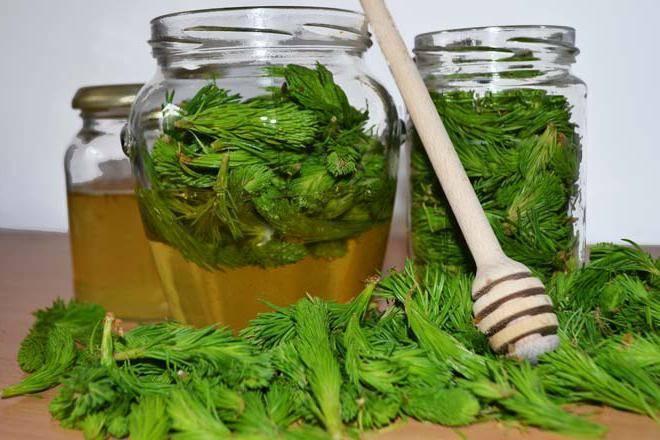Лекарство из хвои сосны от кашля
