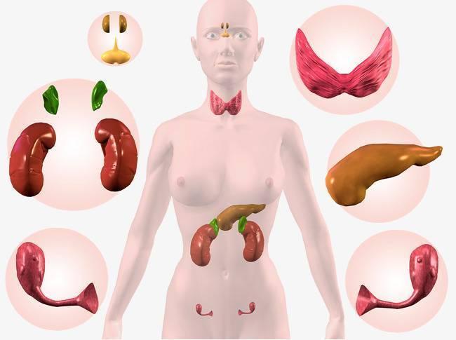 симптомы нарушения эндокринной системы