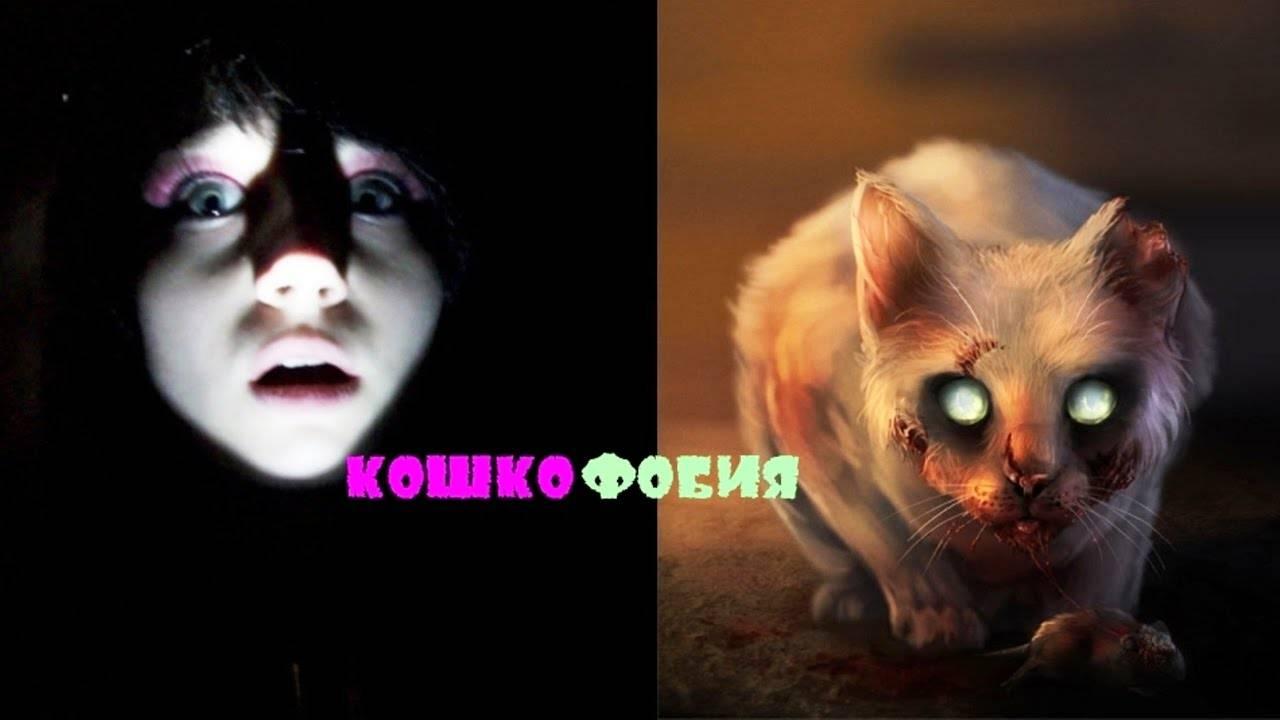 Айлурофобия — боязнь кошек: как протекает и как лечить