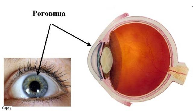 повреждение роговицы глаза симптомы