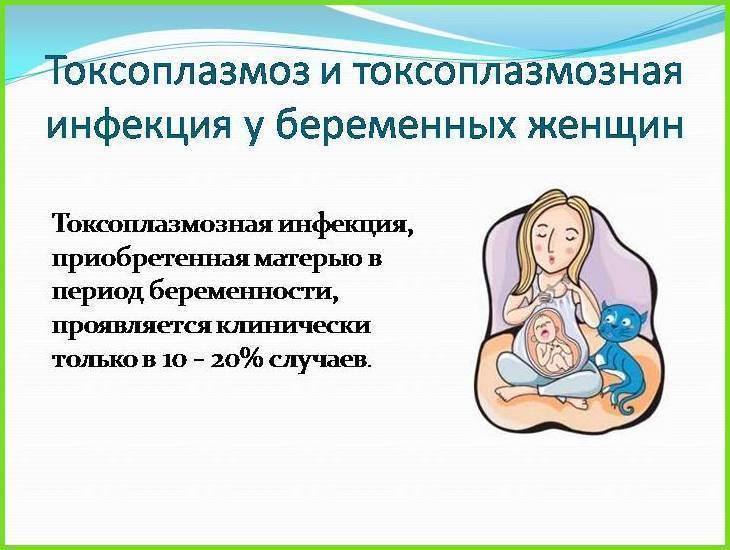 Токсоплазмоз во время беременности: не так страшен, как его малюют…. заражение токсоплазмозом при беременности: симптомы и лечение