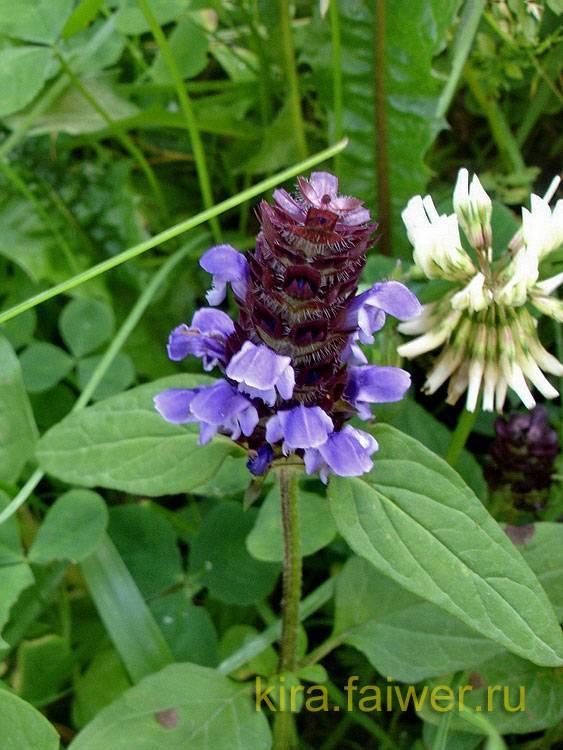 травы для лечения горла