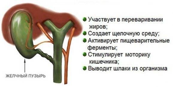 врожденный изгиб желчного пузыря