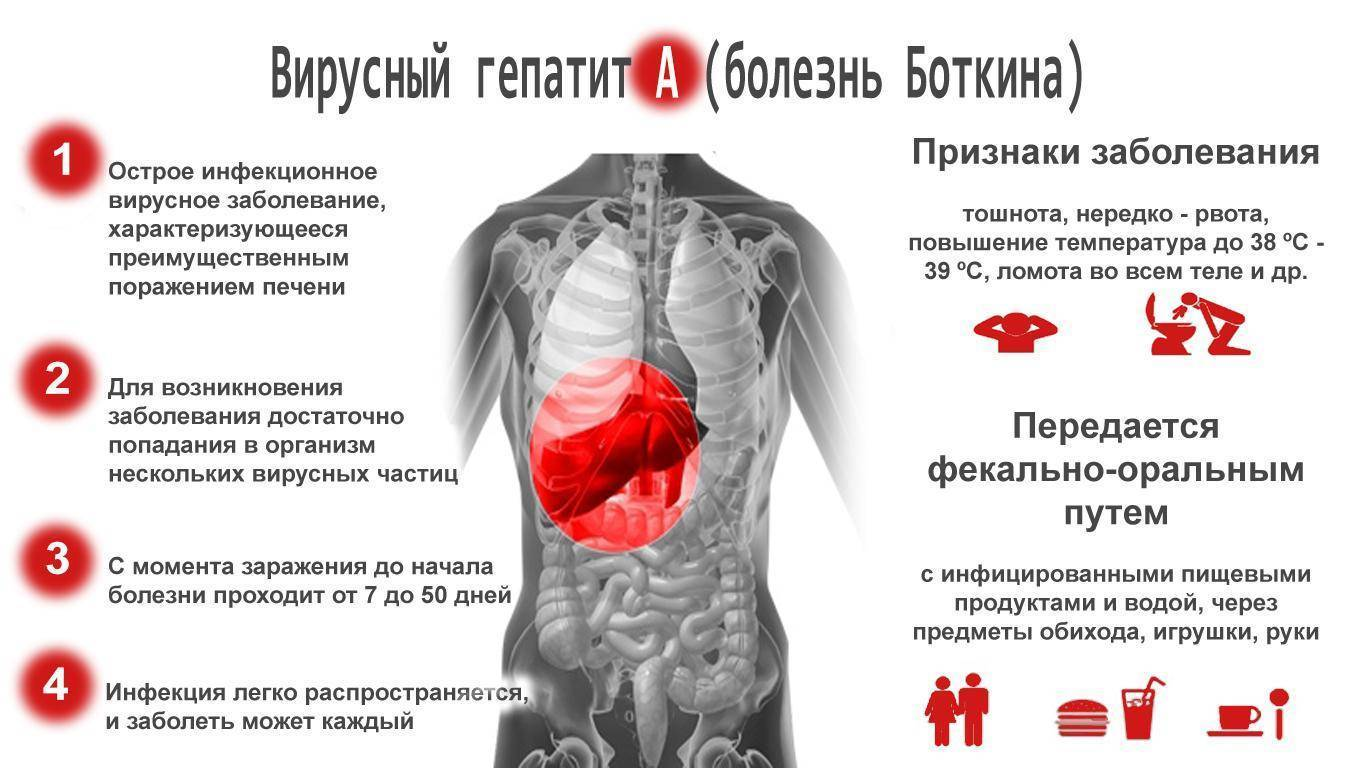 вакцина против гепатита а