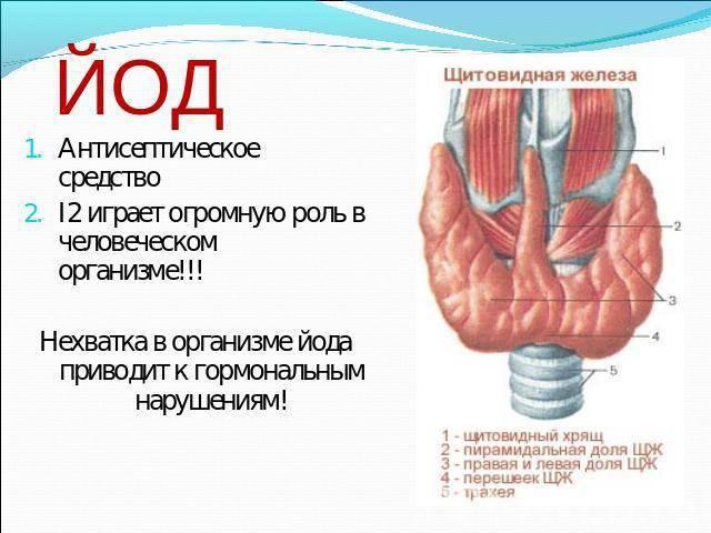 Гипотиреоз. причины, симптомы, современная диагностика и эффективное лечение болезни.