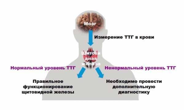 пониженный ттг симптомы