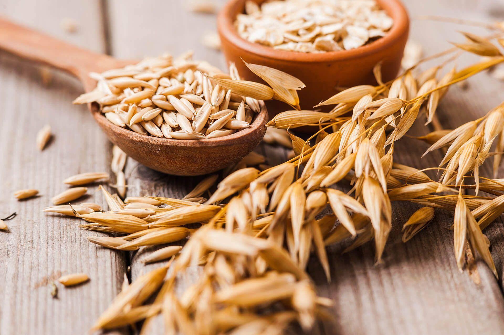 Овес от кашля: проверенные рецепты, настои и ингаляции