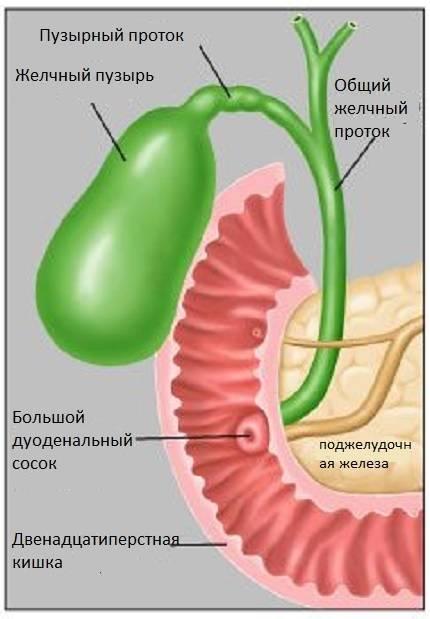 дисхолия желчного пузыря лечение