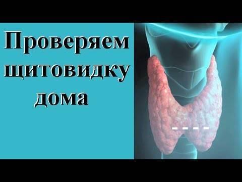 Как проверить свою щитовидку с помощью градусника :: инфониак