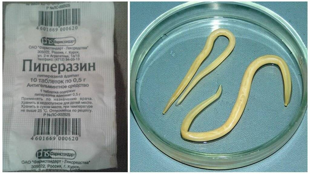 Эффективные препараты для профилактики паразитов в организме человека