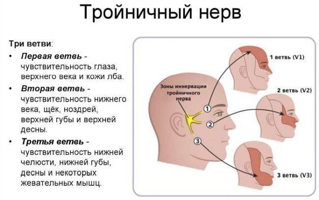 Все симптомы воспаления тройничного нерва