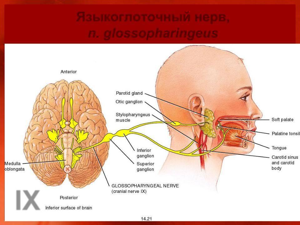 Невроз гортани: симптомы, диагностика и методики лечения