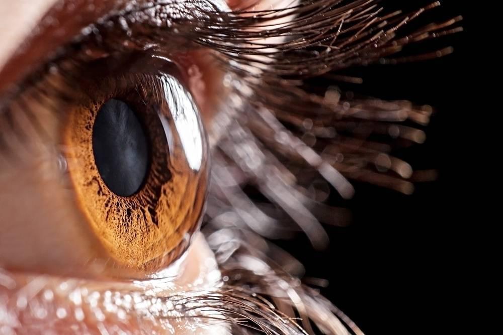 роговица глаз