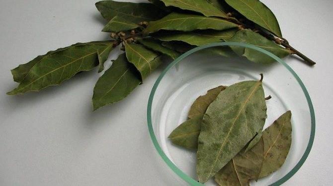 Цистит лечение народными средствами лавровый лист