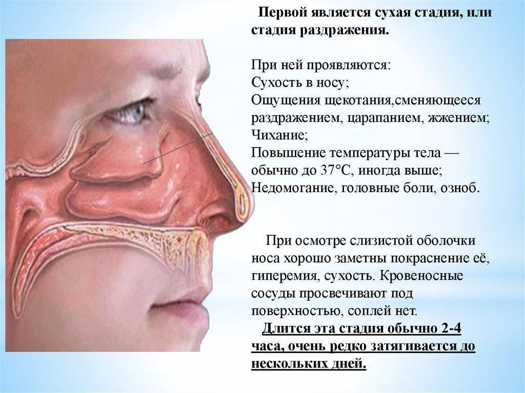 Почему может быть холодный нос у ребенка, и что делать