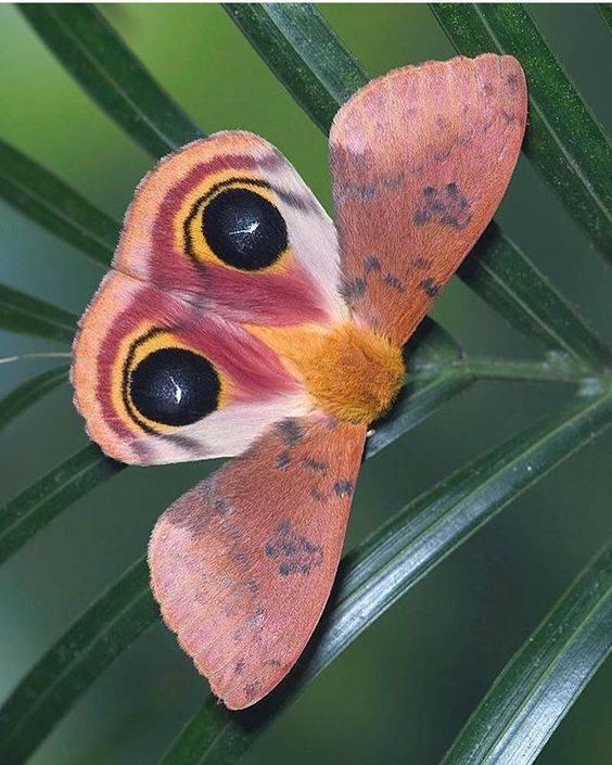 Боязнь насекомых: как называются фобии бабочек, тараканов и червей? что такое инсектофобия или энтомофобия (лепидоптерофобия)?