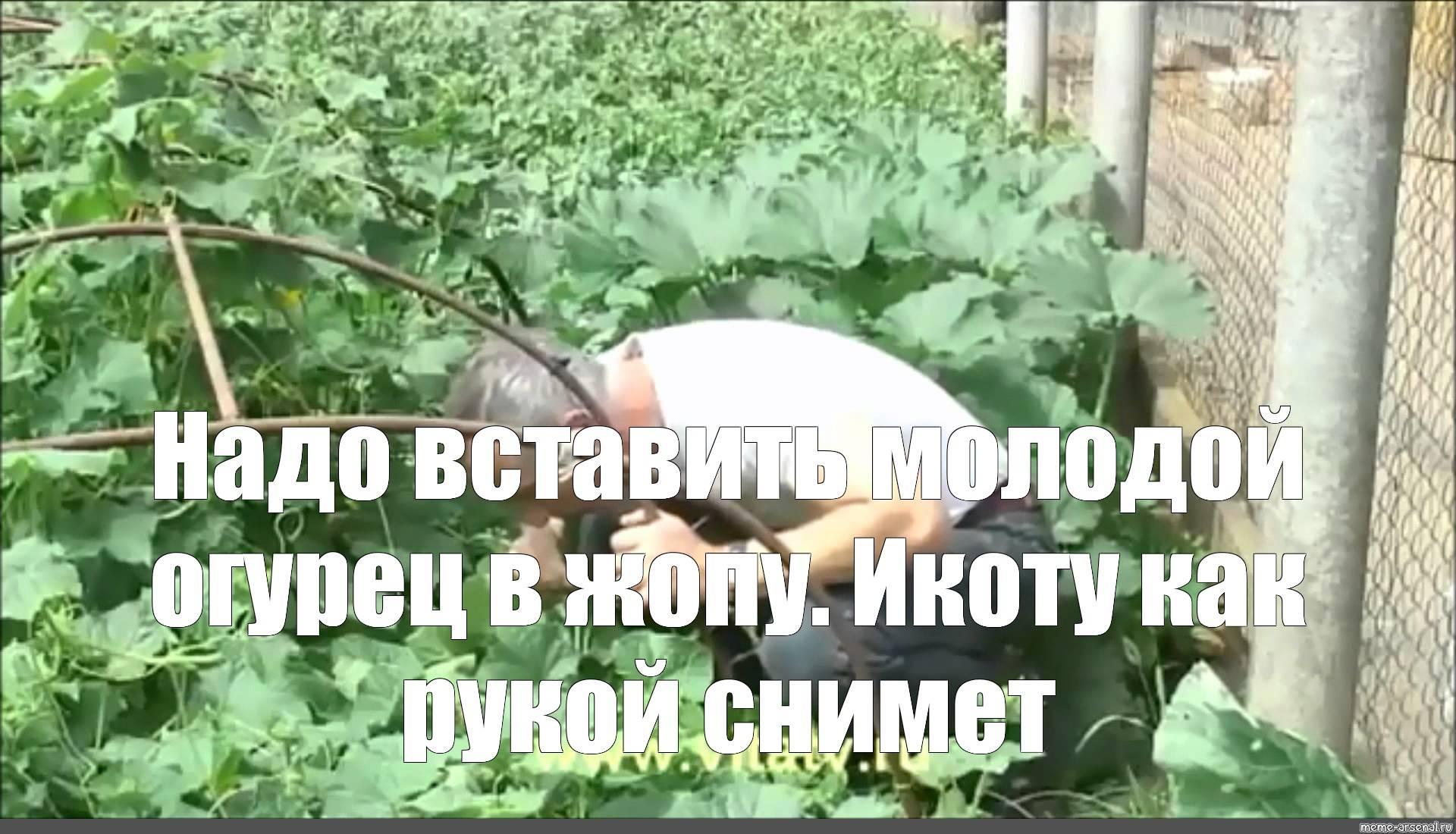 Геннадий малахов огурец от геморроя