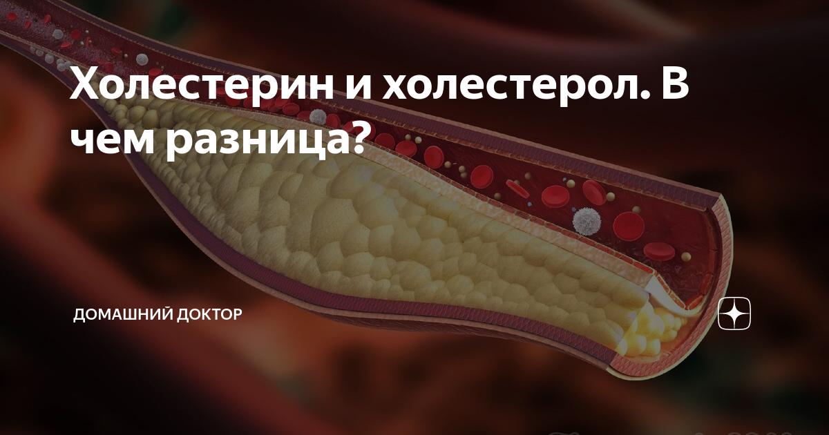 Связь семечек подсолнуха с уровнем холестерина