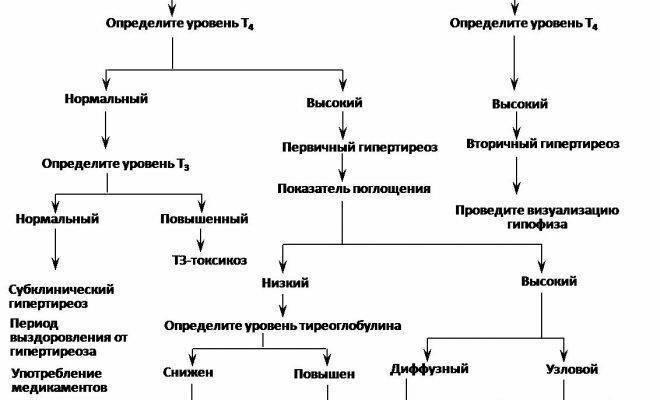 тироксин т4 свободный понижен