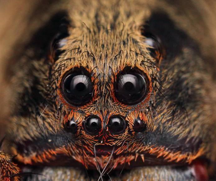 Боязнь бабочек — как называется фобия