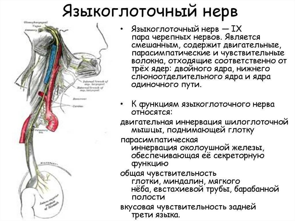 Когда боль в горле — не ангина, или как распознать невралгию языкоглоточного нерва?
